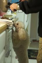Lemmikloomade toitmine