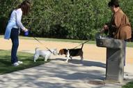 Jõustus lemmikloomade pidamise nõudeid kehtestav määrus