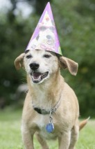 Terjeri segu Max sai 26 aastaseks