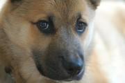 Kiviõli muutis koerte registreerimise kohustuslikuks
