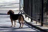 Maarja-Liis Ilus hakkab teles lemmikloomadele kodu otsima