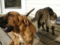 Kas koerad on targemad kui kassid?