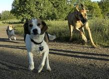 Sõber koeras taltsutatakse ulakaid koeri