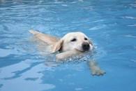 Loomaarst: koera või kassi randa võtta pole mõtet