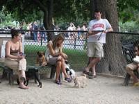 Koplis avatakse koerte jalutusväljak