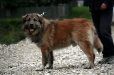 Kadunud koer