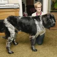 Maailma pikim koer