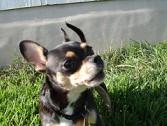 Koerad võivad tunda armukadedust