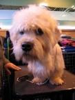 Kreisilinnapäeval selgub Paide kaunim koer