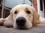 Sõbralik koer sai Kõinastul jõhkarditelt peksa ja kuuli