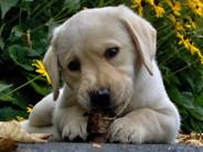 Pärnu toetab uuest aastast koerte kiipimist