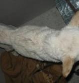 Virumaa varjupaigas vajab näljutatud koer abi