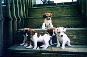 Koerakutsikad päästsid väikese poisi elu