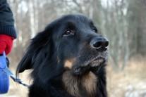 Miks mõni koer haugub nagu pöörane
