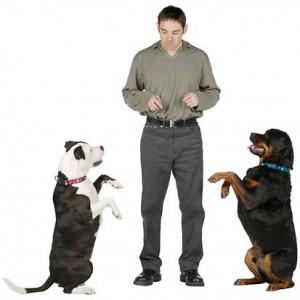 Harjutusi koera koduseks õpetamiseks