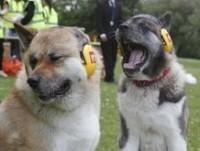 Suurbritannia koerad püstitasid valju haukumise rekordi