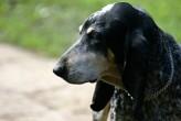 Nõmmel saab pühapäeval koera kiipida 50 krooni eest