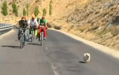 Kodutu koer läbis koos ratturitega 1700 kilomeetrit