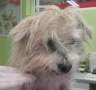 Kadrina vallast leiti maantee ääres lebanud koer