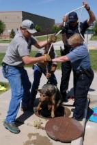 Marjuline leidis kaevu kukkunud koera