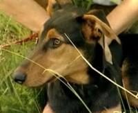 Auto ette hüpanud kutsika terveks ravinud juht otsib koerale peremeest