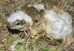 Koer oksendas välja elusa kärnkonna