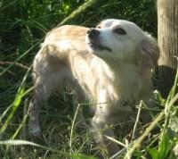 Kukruselt leitud koer