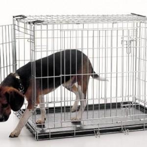 Koerapuur ja kutsika puhtusepidamine