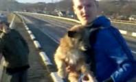 Loomapiinajast leedulane viskas koera sillalt alla