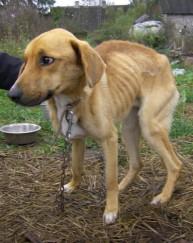 Näljutatud koer Luke