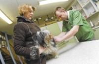 Kasse ja koeri võib vaktsineerida iga kahe aasta tagant
