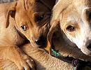 AITAB! Rahvaalgatus Loomakaitseseaduse ja sellega seonduvate õigusaktide muutmiseks sai avapaugu!