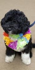 USA loomakaitsjad pettusid president Obama koeravalikus
