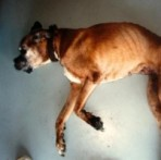 Hoiupaika toodi kohutavas seisukorras koer