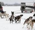 """Eesti Rakendisportlaste Liit korraldab koerte rakendispordivõistluse """"Sügiskross 2009"""""""