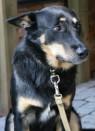 Rakke vald karmistas koerte pidamise nõudeid