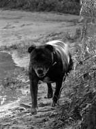 Kodutute loomade mälestamise päev