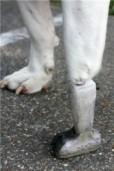 Tehisjalg koerale