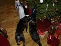 Pühapäeval toimub vahva jõululaat Kingitused lemmikutele