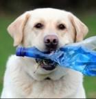Labrador Tubby on Suurbritannia parim taaskasutaja