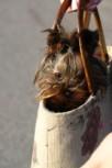 Müüja hüvitab haigete koerte ravikulud