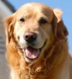 Koer helistas päästeteenistusse