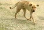Taluperemees ja sulane mõisteti koera hukkamise katse eest vangi