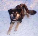 Võru koerte varjupaigast varastati koer