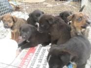 Varjupaik vaevleb koertebuumis