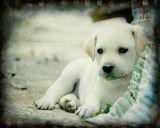 Meie kõige armsamad koerad!!