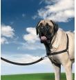 EasyWalk tirimisvastased jalutustraksid koertele