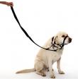 Halti ninarihm koerale käitumise korrigeerimiseks