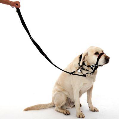 9b44649535d Halti ninarihm koerale käitumise korrigeerimiseks