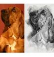 Digitaalne portree Sinu koerast